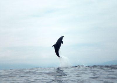 delfin...