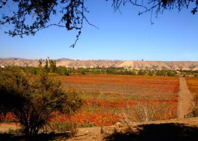 vinicola-ocho-tierras-12
